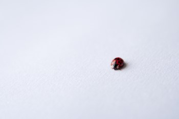 how to tell if a ladybug is dying dead or hibernating