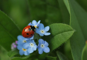 will ladybugs stay in my garden