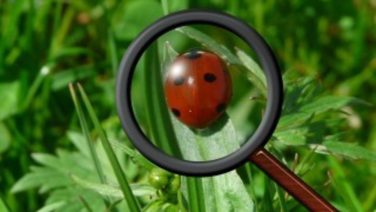 Ladybug Frequently Asked Questions - Get Ladybug Facts Here