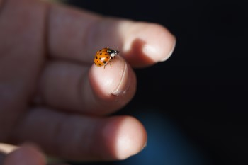 101 guide to ladybugs