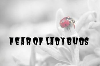 fear of ladybugs